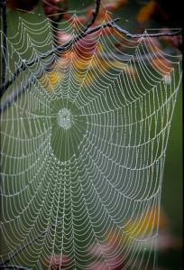 2e903-spiderweb